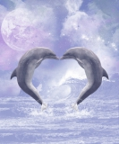 Delfin Liebes Essenz - Dolphin Love Essenz